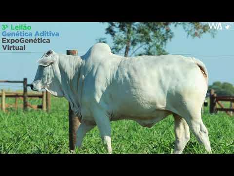 LOTE 16 - REMC A 2064 - 3º Leilão Genética Aditiva Expogenética 2020