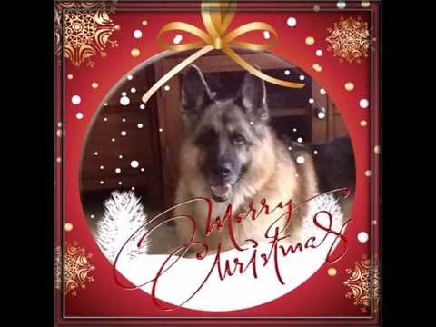 merry christmas from german shepherd nation 2014