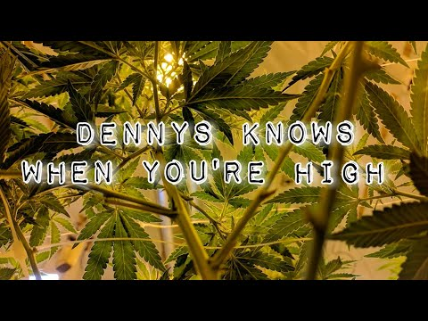 Dennys Knows When You're High 7-15-21