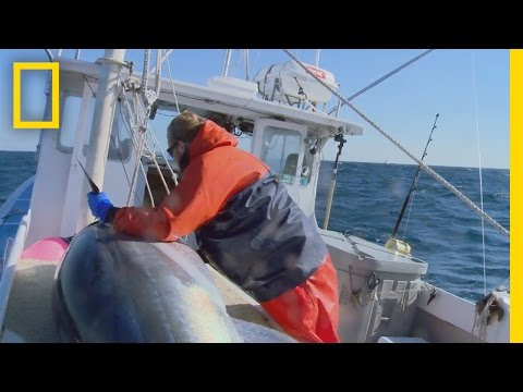 Catch Of The Week - First Strike | Wicked Tuna: Outer Banks