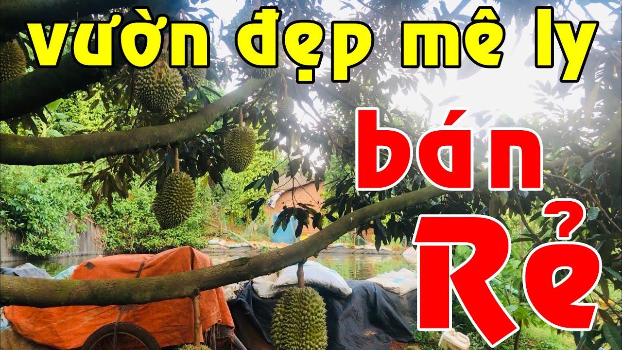 Nhà vườn dày đặc trái cây ao đầy cá ĐẸP MÊ LY có 400m2 đất thổ cư bán lẻ giá rẻ tổng 1.9ha ở Di Linh