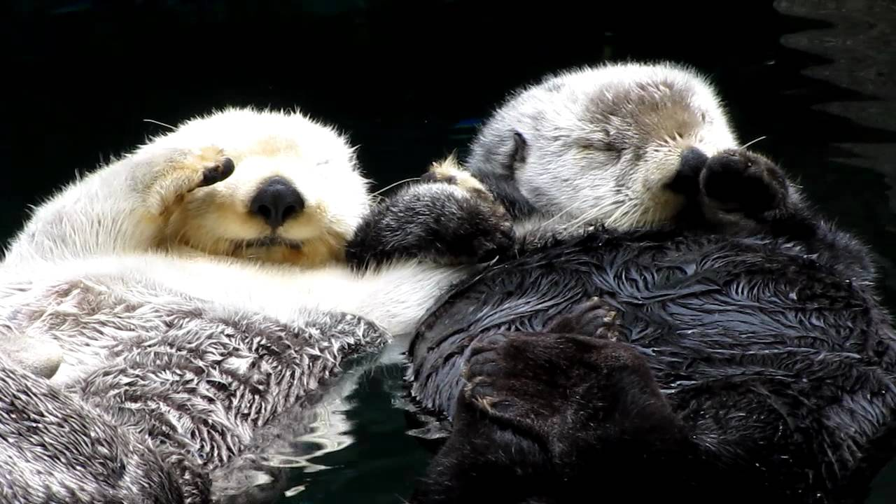 Image result for sea otters holding hands