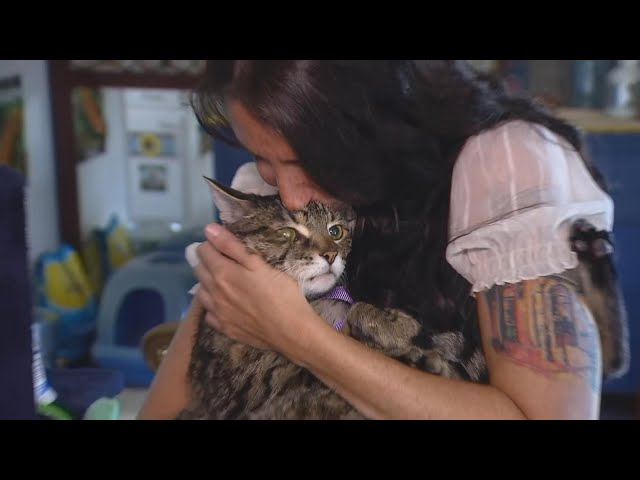 Ex-Nanny Faces Charges for Allegedly Stealing Family Cat