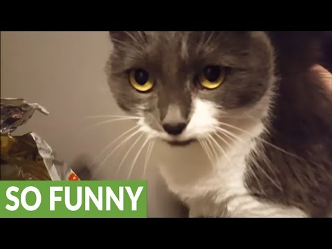 Is this the most talkative cat ever?