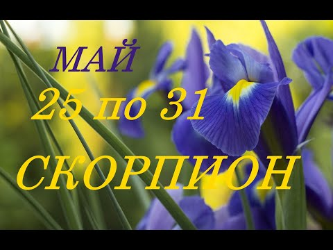 СКОРПИОН.. ТАРО-ПРОГНОЗ на НЕДЕЛЮ с 25 по 31 МАЯ 2020 г.