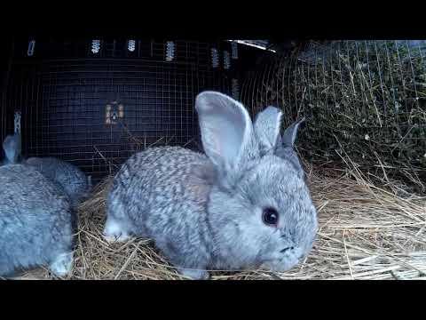 Чем можно подкармливать 20-ти дневных крольчат в зимнее время.