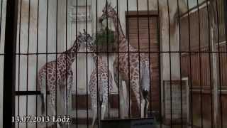 Polskie zoo