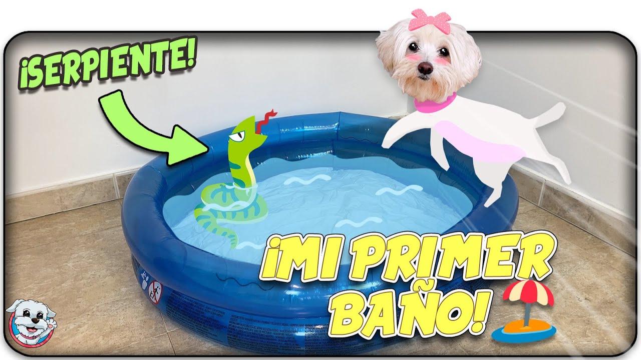 Mi Primer BAÑO del VERANO!⛱ La PISCINA Hinchable de Dasha!☀️ Anima Dogs