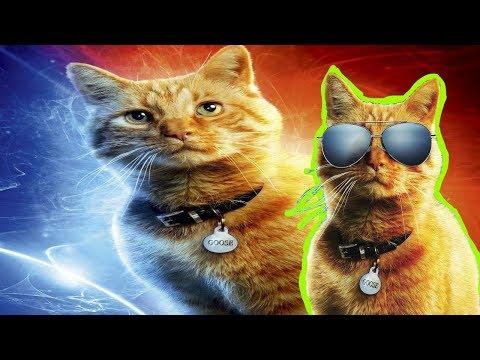 Suara Kucing Lucu Youtube