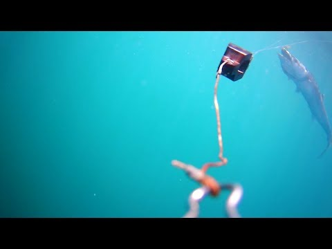 Underwater Video Of King Mackerel Striking Bait