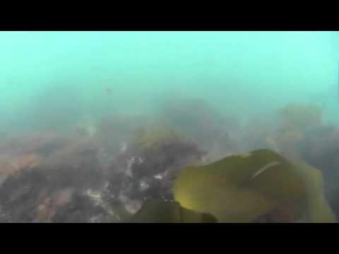 Gerry Island Marblehead MA Underwater
