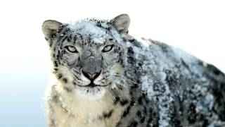 Snow Leopard wallpaper change