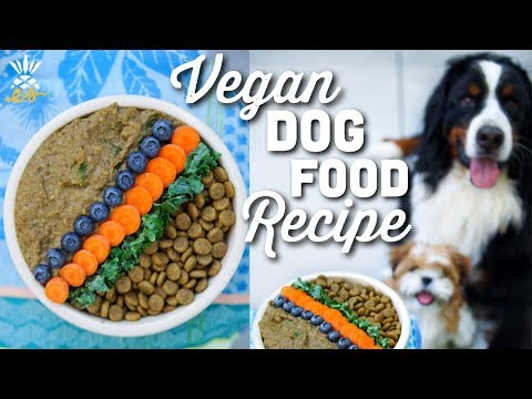 What We Feed Our Dog: Homemade Vegan Dog Food Recipe
