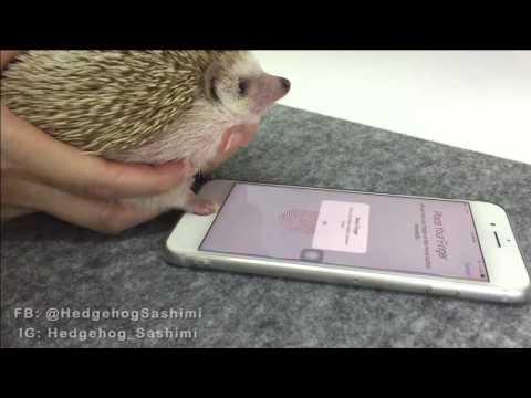 Hedgehog Fingerprint Opens Smart Phone