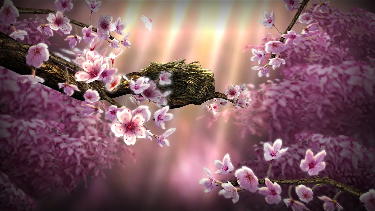 Season Zen HD Live Wallpaper - YouTube