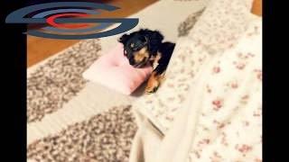 ペット(犬・猫)のためのおるすばんヒーリング音楽⑦ 長時間のお留守番に ...