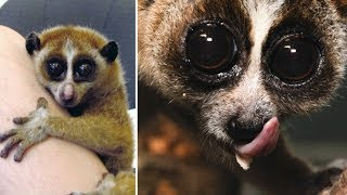 Exotic Pets That Are ILLEGAL To Own