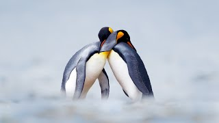 Love Is in the Air | Oceana