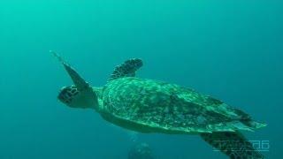 Science O.C.N. -  Deep Water Ocean Lounge - Unknown Signs