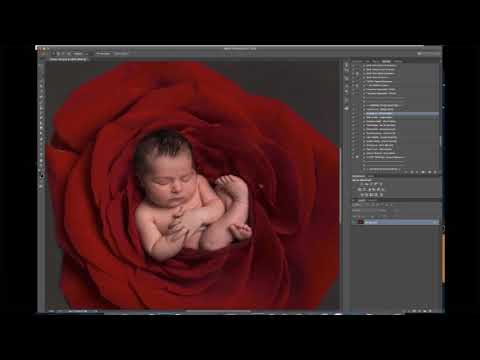 newborn-photography-session---baby-laying-inside-a-rose