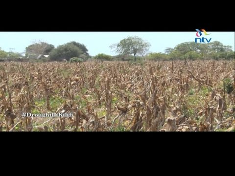 Drought in Kilifi takes a toll on the residents
