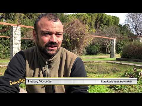 Ο εκπαιδευτής άγριων πουλιών Σταύρος Αθανασίου σε επιδείξεις στον Βοτανικό Κήπο Χαϊδαρίου