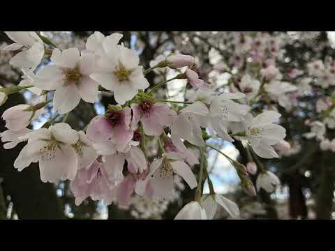elijah who - spring love