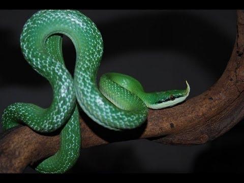 Scary Snakes : SnakeBytesTV