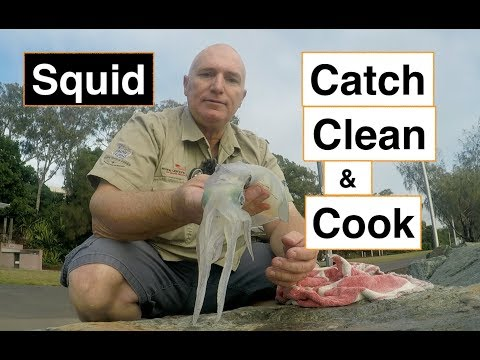 CATCH And COOK SQUID. From The Bay To The Plate