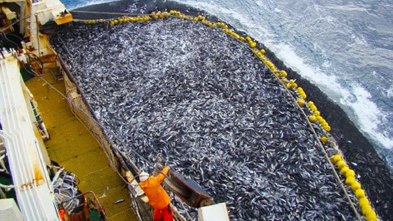 15 Most Surprising Fishing Moments In The World