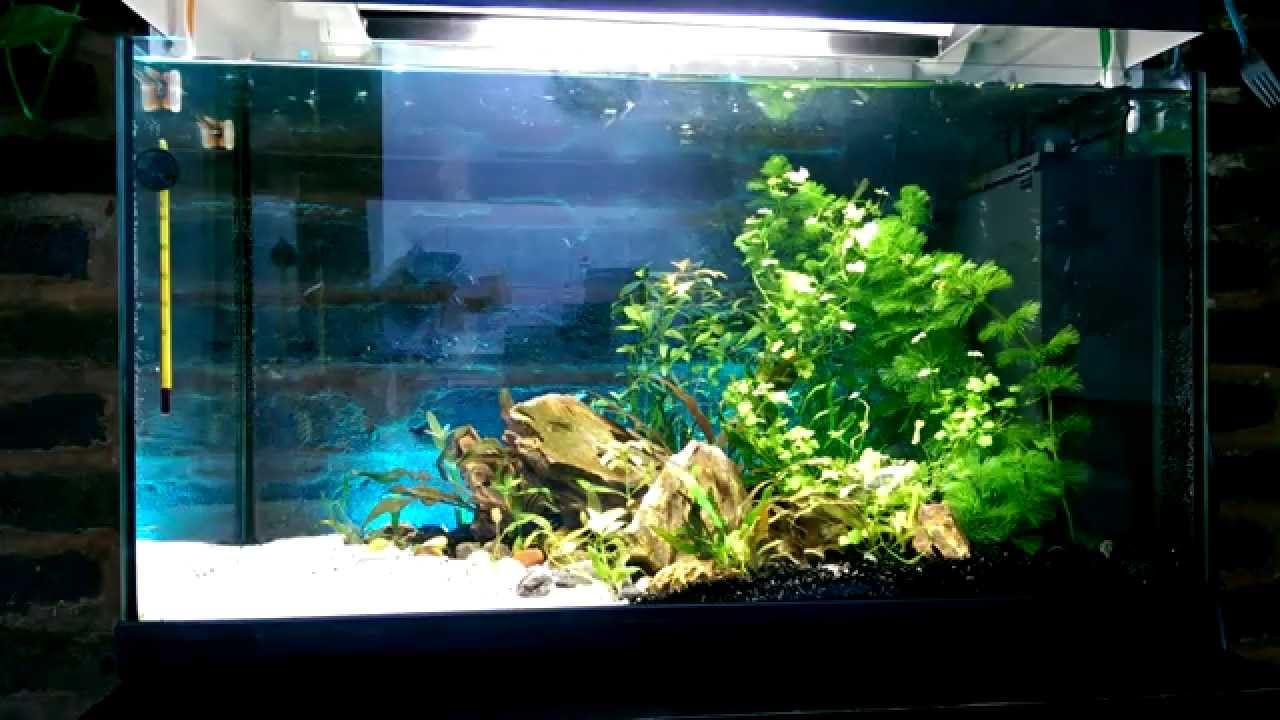 Simple Aquascaping - YouTube
