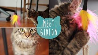 Meet Gideon! | kittenissocoollike