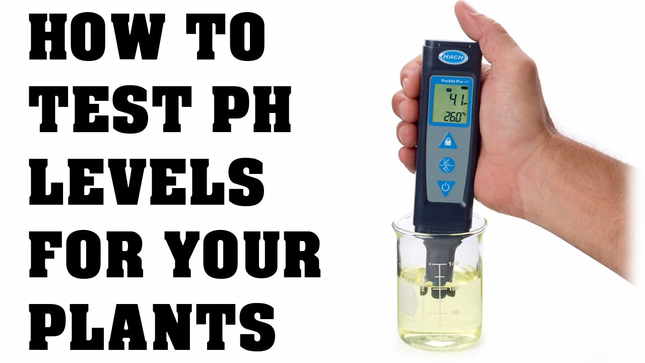 Super Soil: How To Manage pH Levels | The Cannabis Reporter