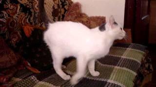 Приют для животных 4: кошечка