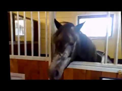 Сайт о лошади - Видео про лошадей.