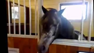 Самые смешные лошади, Кошки. Люди