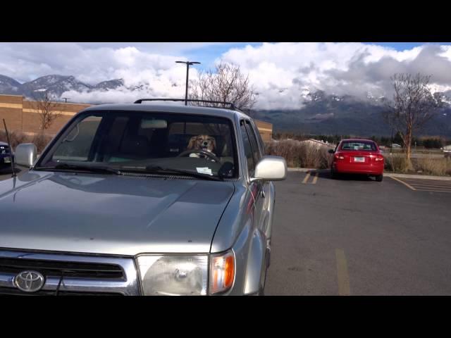 Impatient Honking Beagle