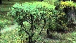 видео Жизненные формы растений