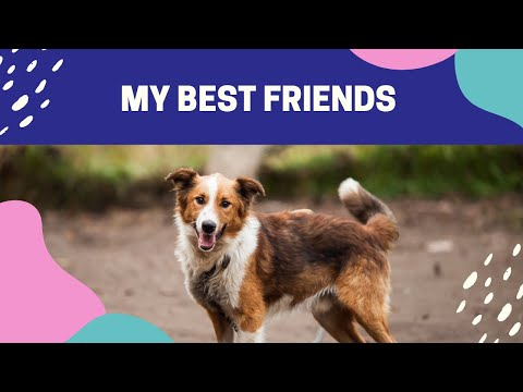 🤣 Funniest 🐶 Dogs And 😻Cats - Best Of The 2020 Videos