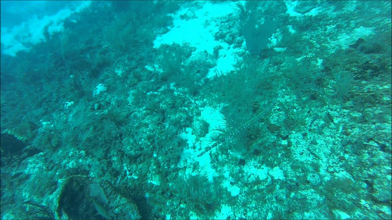 Diving The Breakers Reef West Palm Beach Fl Youtube