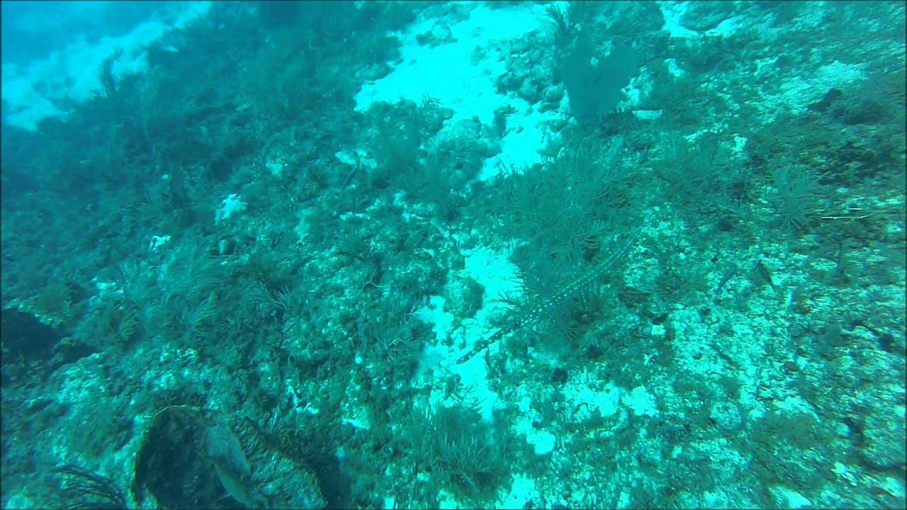Diving The Breakers Reef