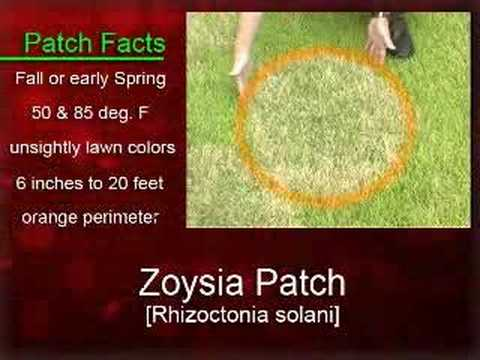 Landscape Enemies Zoysia Patch Youtube