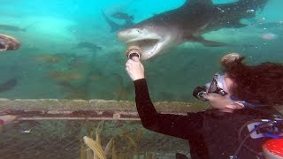 Animal Encounter at the Sea Aquarium Park in Curacao - Feeding Sting Rays, Sea Turtles, & Sharks