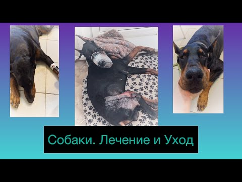 Рак у Собак. Лечение и Уход. Cancer In Dogs .Treatment And Care.