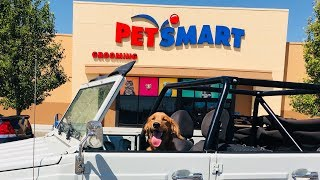 Golden Retriever PUPPY Drives Car to Buy New Toy!