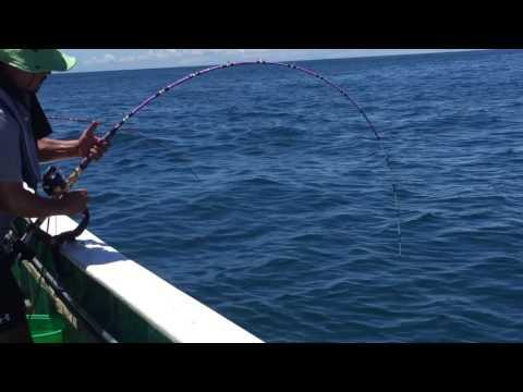 Japan. Chiba. Fishing. Seagull.