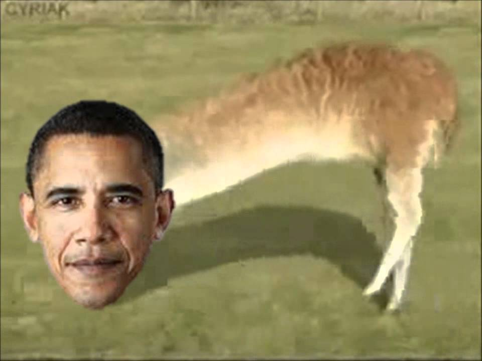obama is a llama