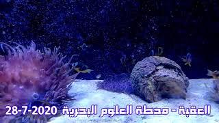 العقبة - محطة العلوم البحرية  28-7-2020