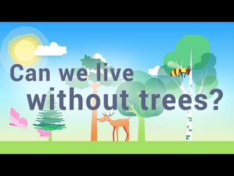 CAN WE LIVE WITHOUT TREES ? - UK | Best educational video (all ages)