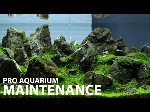 Aquarium maintenance in 1 hour at Green Aqua - 240L display